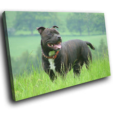 A148 Framed Canvas Print Colourful Modern Animal Wall Art - Black Bull Terrier Open Field-Canvas Print-WhatsOnYourWall