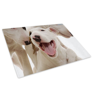 White Bull Terrier Puppy  Glass Chopping Board Kitchen Worktop Saver Protector - A150