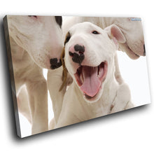 A150 Framed Canvas Print Colourful Modern Animal Wall Art - White Bull Terrier Puppy-Canvas Print-WhatsOnYourWall