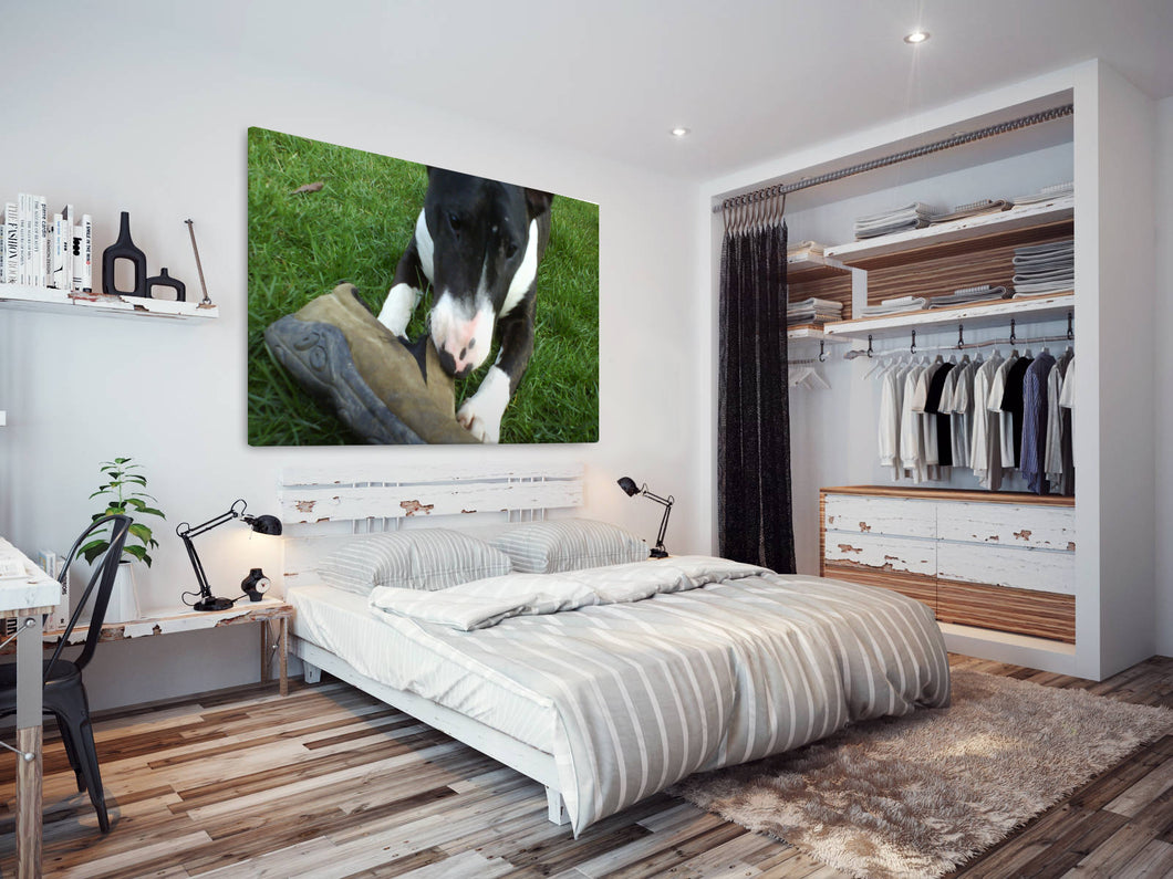 A152 Framed Canvas Print Colourful Modern Animal Wall Art - Black White Bull Terrier Puppy-Canvas Print-WhatsOnYourWall
