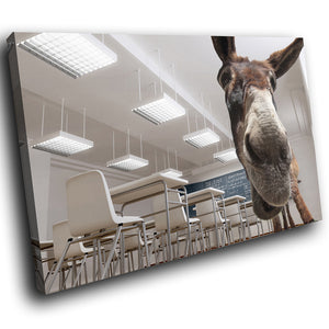 A166 Framed Canvas Print Colourful Modern Animal Wall Art - Classroom Donkey Funny-Canvas Print-WhatsOnYourWall
