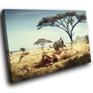 A185 Framed Canvas Print Colourful Modern Animal Wall Art - Africa Plains Lion Zebra Attack-Canvas Print-WhatsOnYourWall