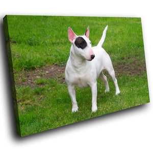 A186 Framed Canvas Print Colourful Modern Animal Wall Art - Bull Terrier White Puppy Dog-Canvas Print-WhatsOnYourWall
