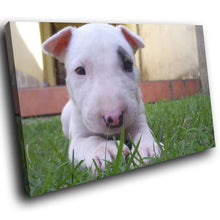 A187 Framed Canvas Print Colourful Modern Animal Wall Art - White Bull Terrier Puppy-Canvas Print-WhatsOnYourWall