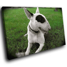 A193 Framed Canvas Print Colourful Modern Animal Wall Art - White Bull Terrier Puppy Dog-Canvas Print-WhatsOnYourWall
