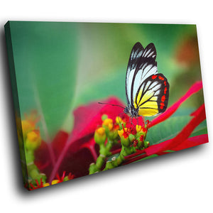 A199 Framed Canvas Print Colourful Modern Animal Wall Art -  Red Green Yellow Butterfly - WhatsOnYourWall
