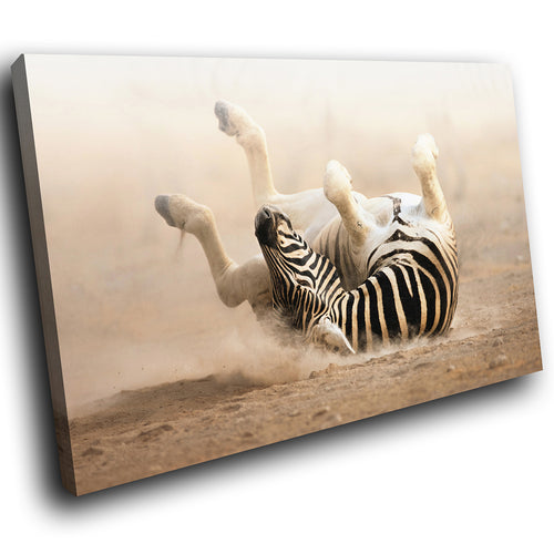 A202 Framed Canvas Print Colourful Modern Animal Wall Art - Brown Black White Rolling Zebra-Canvas Print-WhatsOnYourWall