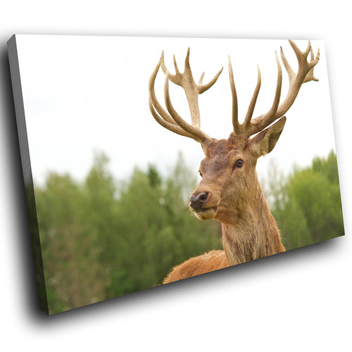 A214 Framed Canvas Print Colourful Modern Animal Wall Art - Brown Deer Stag Forest-Canvas Print-WhatsOnYourWall