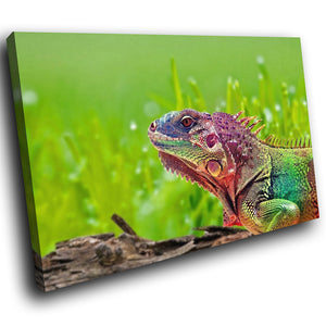 A235 Framed Canvas Print Colourful Modern Animal Wall Art -  Green Red Iguana Log Grass - WhatsOnYourWall