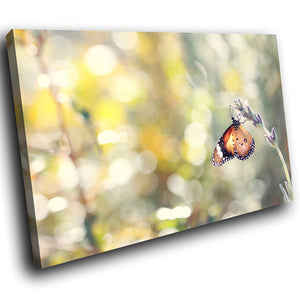 A241 Framed Canvas Print Colourful Modern Animal Wall Art -  Brown Butterly Flower Feeding - WhatsOnYourWall