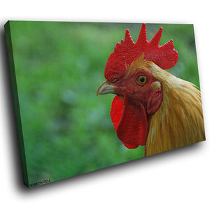 A248 Framed Canvas Print Colourful Modern Animal Wall Art - Brown Cow Leghorn Rooster-Canvas Print-WhatsOnYourWall