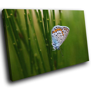 A256 Framed Canvas Print Colourful Modern Animal Wall Art - White Winged Butterfly Garden-Canvas Print-WhatsOnYourWall