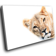 A272 Framed Canvas Print Colourful Modern Animal Wall Art - African Lioness Predator Gaze-Canvas Print-WhatsOnYourWall