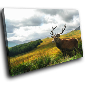 A275 Framed Canvas Print Colourful Modern Animal Wall Art - Wild Brown Stag Open Grassland-Canvas Print-WhatsOnYourWall