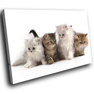 A277 Framed Canvas Print Colourful Modern Animal Wall Art - Litter Four Adorable Kittens-Canvas Print-WhatsOnYourWall