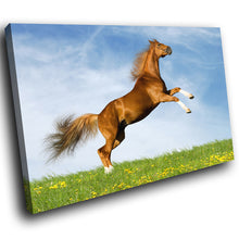 A280 Framed Canvas Print Colourful Modern Animal Wall Art - Brown Stallion Rearing Grass-Canvas Print-WhatsOnYourWall