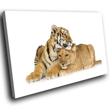 A282 Framed Canvas Print Colourful Modern Animal Wall Art - Bengal Tiger And Lioness Rest-Canvas Print-WhatsOnYourWall