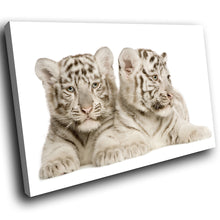 A287 Framed Canvas Print Colourful Modern Animal Wall Art -  Two White Bengal Tigers Resting - WhatsOnYourWall