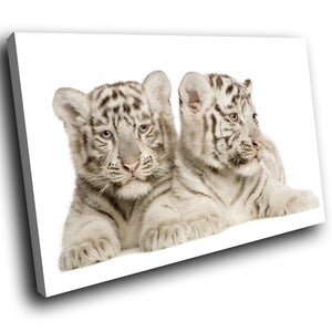 A287 Framed Canvas Print Colourful Modern Animal Wall Art - Two White Bengal Tigers Resting-Canvas Print-WhatsOnYourWall