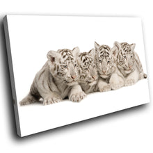 A288 Framed Canvas Print Colourful Modern Animal Wall Art - White Bengal Tigers Resting-Canvas Print-WhatsOnYourWall