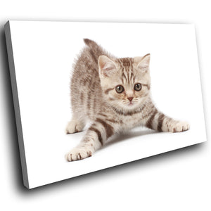 A294 Framed Canvas Print Colourful Modern Animal Wall Art -  Small Brown Kitten Cute Stare - WhatsOnYourWall