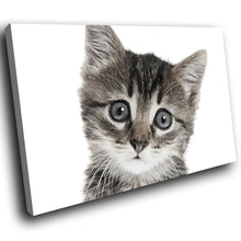 A295 Framed Canvas Print Colourful Modern Animal Wall Art - Black White Cute Kitten Stare-Canvas Print-WhatsOnYourWall