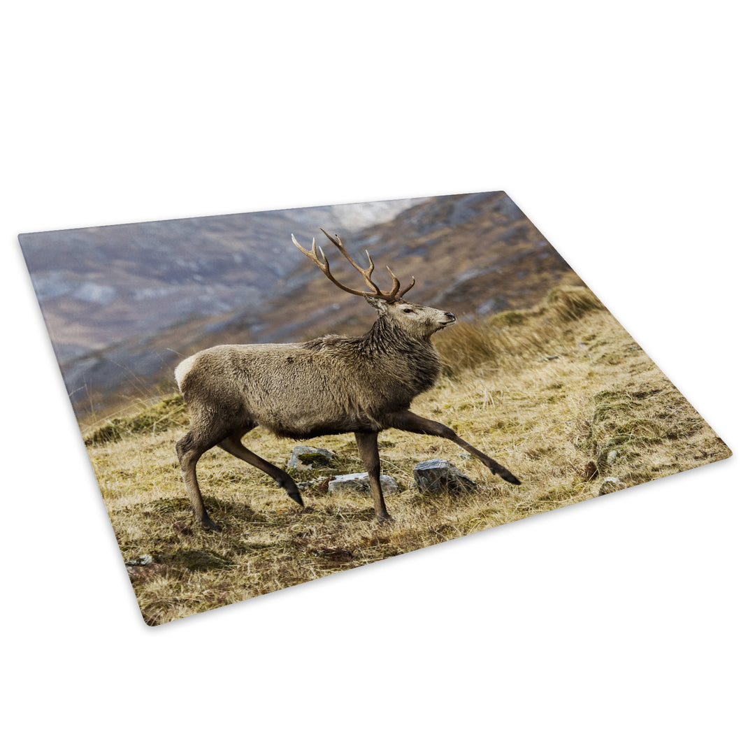 Stag Deer Brown Grass Glass Chopping Board Kitchen Worktop Saver Protector - A515-Animal Chopping Board-WhatsOnYourWall