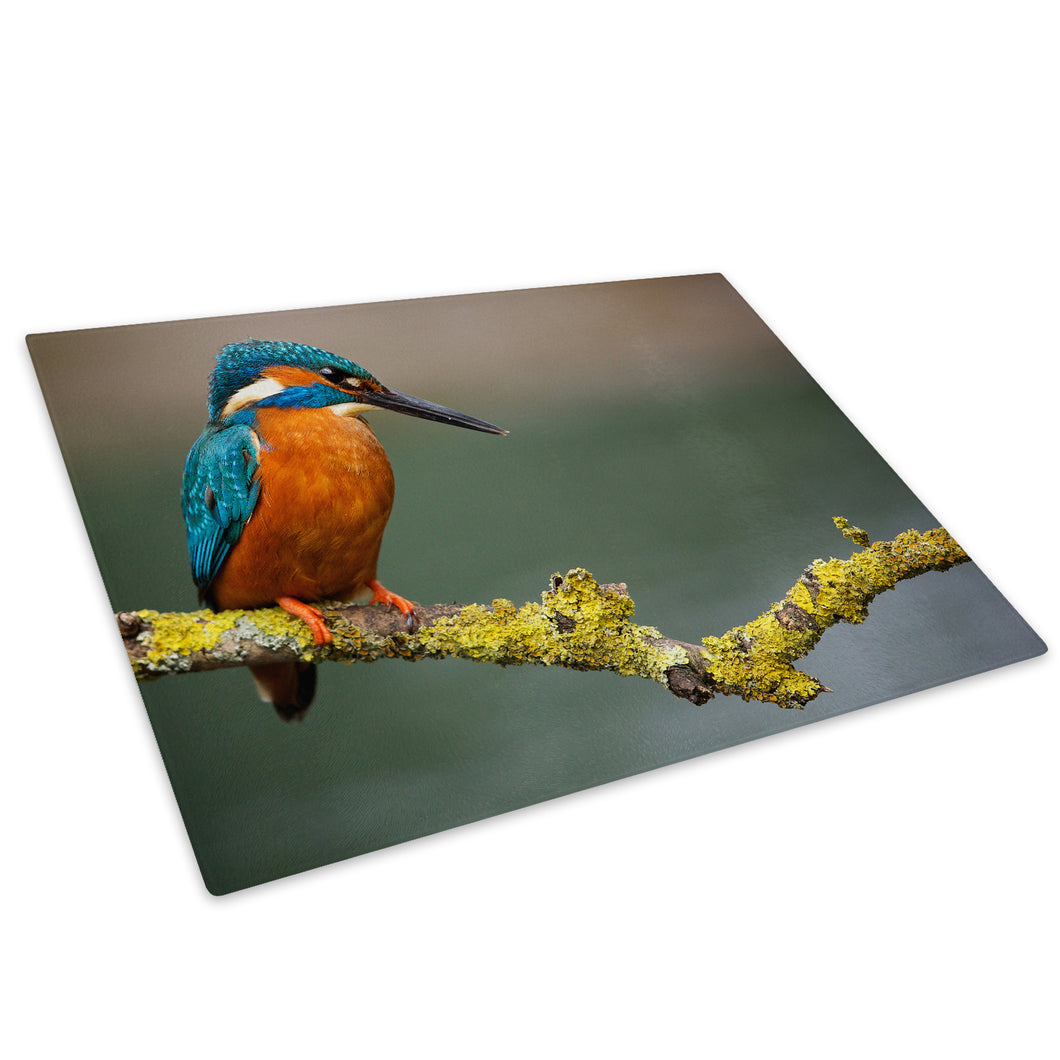 Blue Brown Bird Orange Glass Chopping Board Kitchen Worktop Saver Protector - A583-Animal Chopping Board-WhatsOnYourWall