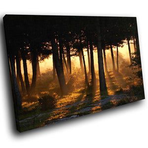 SC010 Framed Canvas Print Colourful Modern Scenic Wall Art - Orange Forest Sunrise Nature-Canvas Print-WhatsOnYourWall