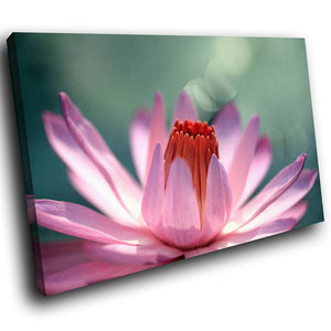 SC123 Framed Canvas Print Colourful Modern Scenic Wall Art - Water Lily Pink Green Flower-Canvas Print-WhatsOnYourWall