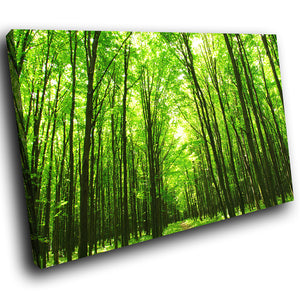 SC276 Framed Canvas Print Colourful Modern Scenic Wall Art - Green Forest Bright Nature-Canvas Print-WhatsOnYourWall