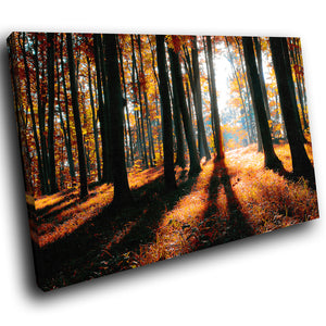 SC286 Framed Canvas Print Colourful Modern Scenic Wall Art - Autumn Orange Forest Nature-Canvas Print-WhatsOnYourWall