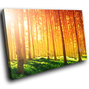 SC287 Framed Canvas Print Colourful Modern Scenic Wall Art - Green Orange Sunrise Forest-Canvas Print-WhatsOnYourWall