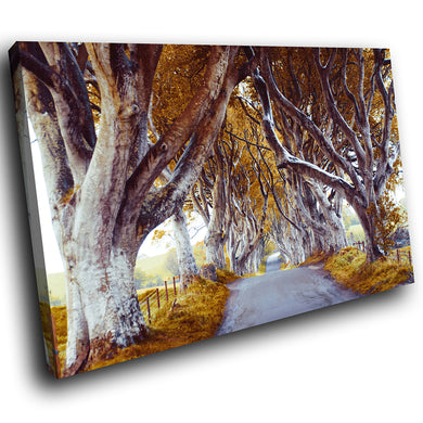 SC834 Framed Canvas Print Colourful Modern Scenic Wall Art - Yellow Dark Hedges Ireland