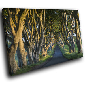SC917 Framed Canvas Print Colourful Modern Scenic Wall Art - Dark Hedges Ireland Nature