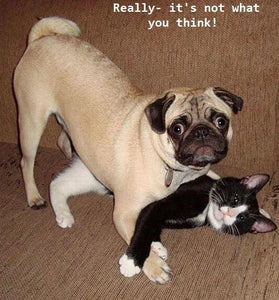 Really, it's not what you think! Dog and cat caught together.