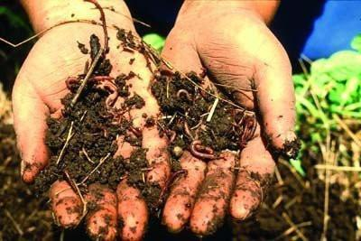 Manure - 100% Organic VERMICOMPOST For Gardening Horticulture Agriculture Plantation Potted Plants