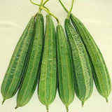 Vegetable Seeds - Ridge Gourd Vegetable Seeds