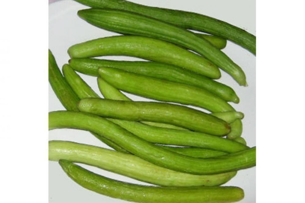Vegetable Seeds - Tarkakri Vegetable Seeds