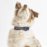 PAW LIG DOG COLLAR