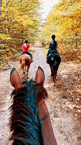 horse trail ride forest equestrian