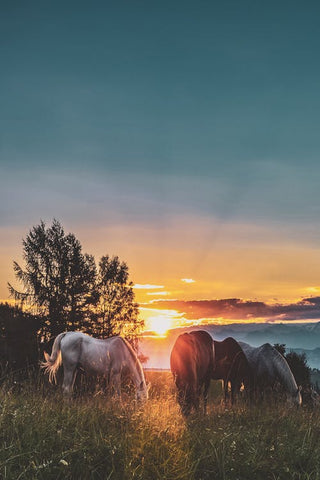 spring farm horses pasture sunset purvida healthy horse blog