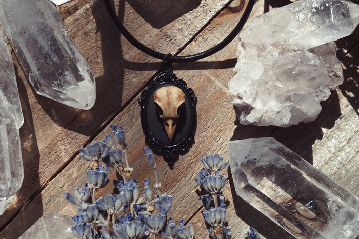 Raven Skull Necklace Necklace