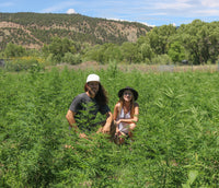Kind Hemp Co Hemp Farm full spectrum hemp oil