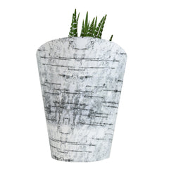Altman Plants holiday succulents in a birch-style wrap - 3.5""