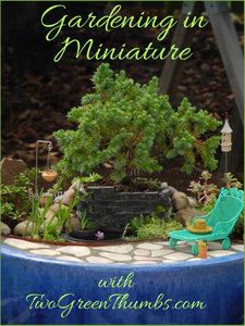 How To Shop for Miniature Garden Plants