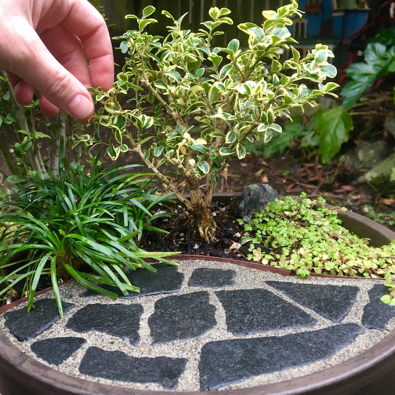 Simple and Authentic Miniature Garden Patio Solutions