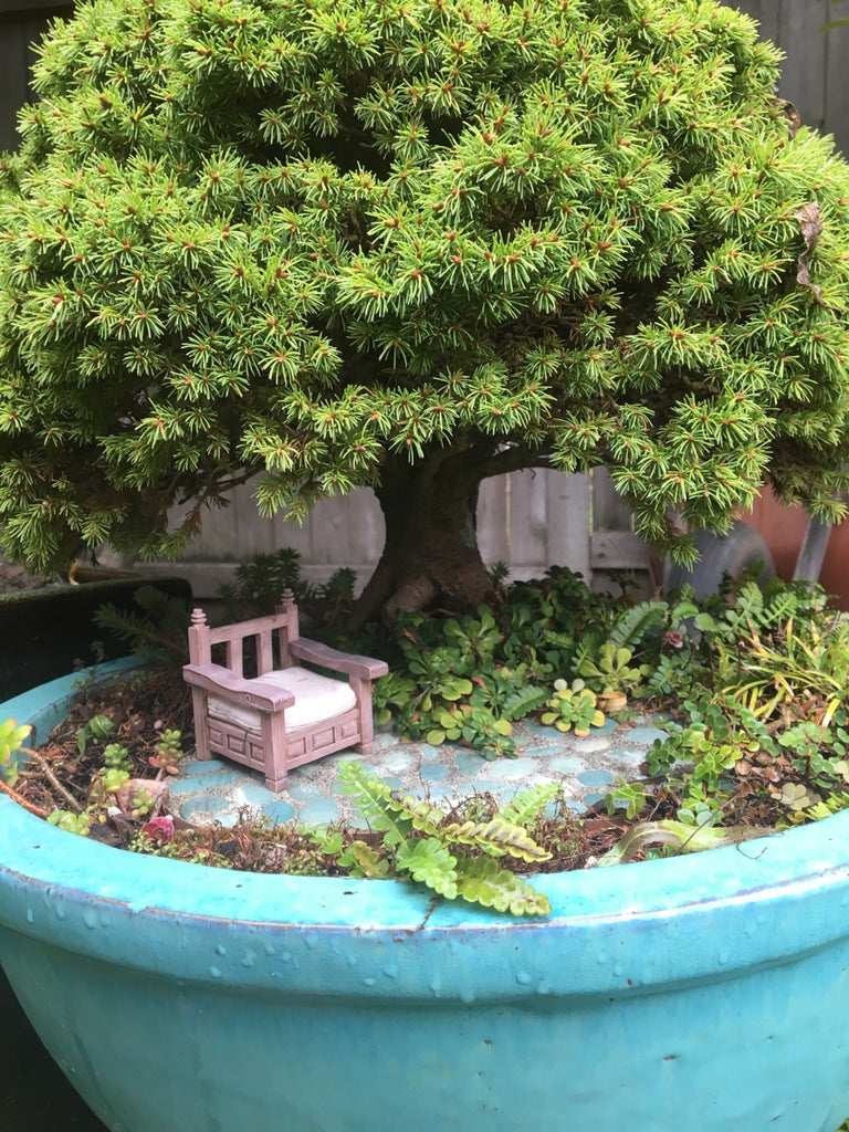 7 Ways Miniature Gardening & Fairy Gardening are Different!