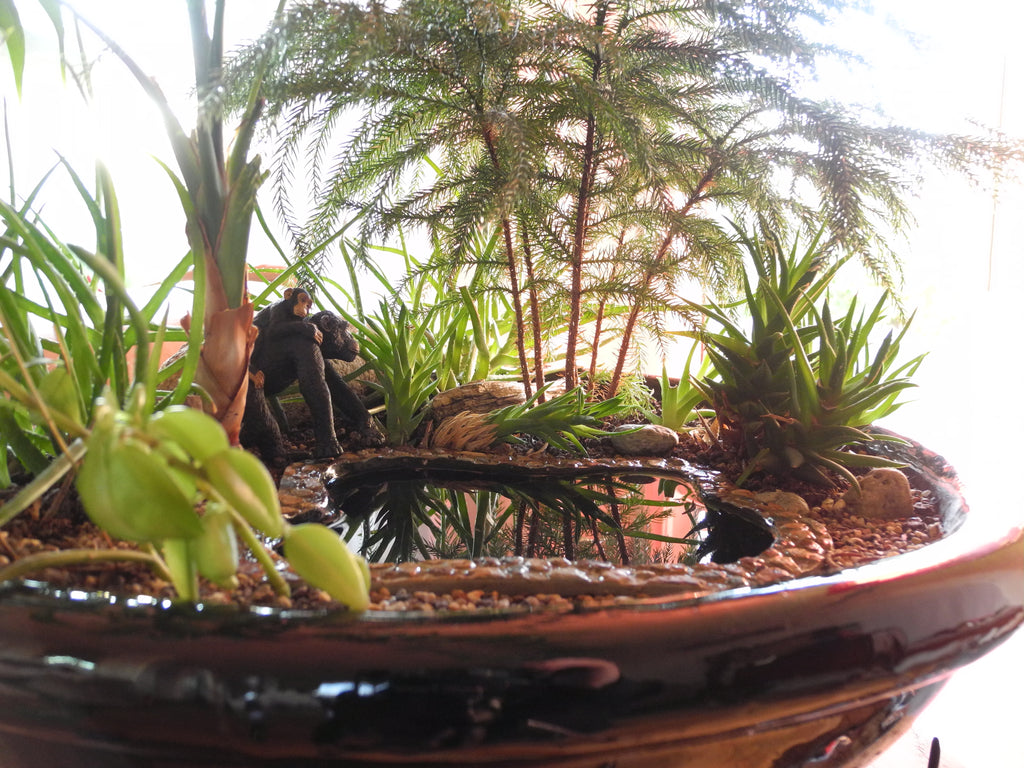 Miniature Garden Tutorial: How to Figure Out Your Indoor Light