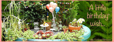 Happy Birthday in the Miniature Garden